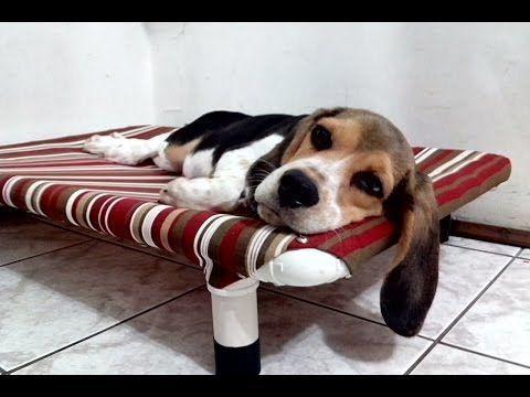 Cama PVC PET Cachorro & Gato - Veja como fazer com baixo custo, resistente, higiênica... - YouTube