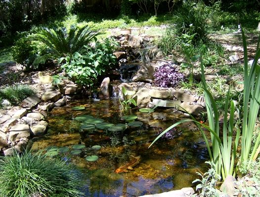 1000 images about pond plants on pinterest gardens for Outside pond plants