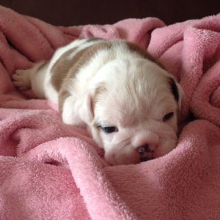 Coco at 2 weeks - RS