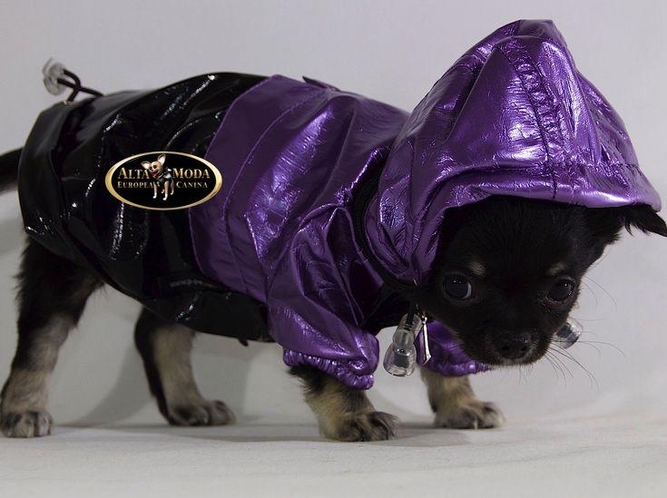 Proteger a los perros pequeños, vestirles con chubasqueros para perros y así no dejar de sacarles de paseo incluso en los dias lluviosos, es una fantástica