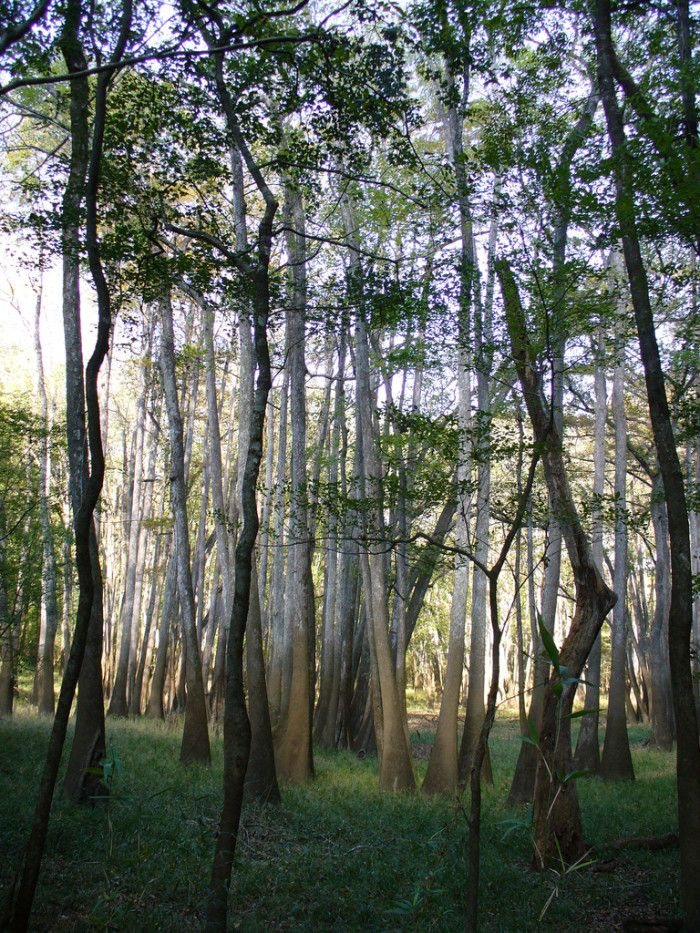 16 Out Of This World Hiking Spots In Florida | 8. Torreya State Park