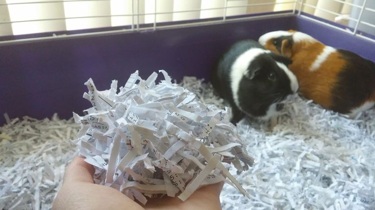 Pet Hacks: DIY Guinea Pig Bedding (recycled shredded paper)