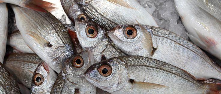 Fuseta Daily Fish Market - except Sundays - Fuseta, East Algarve, Portugal