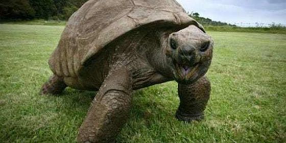 The world's oldest tortoise is discovered to be gay