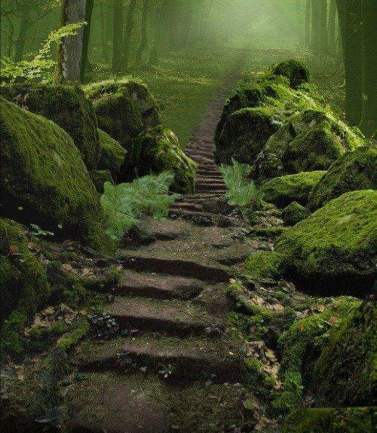 Sherwood Forest, Nottinghamshire, England.