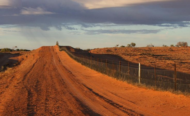 Take a look at Wild Dog Fence and other sites in the Australian Outback #travel #vacation