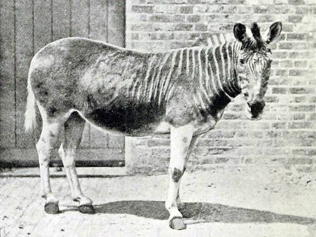 A Glimpse of What We've Lost: 10 Extinct Animals in Photos