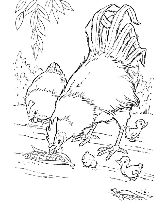 Free Rooster Pictures to Print   Farm Animal Coloring Pages   Printable Chickens Coloring Page Corn fed ...