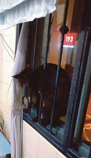 Lelaki Singapura hubungi polis minta bantuan untuk halau kucing hitam garang yang masuk ke rumahnya   Seorang lelaki di sini terpaksa meminta bantuan polis dan Angkatan Pertahanan Awam Singapura (SCDF) selepas seekor kucing menceroboh kediamannya.  Lelaki Singapura hubungi polis minta bantuan untuk halau kucing hitam garang yang masuk ke rumahnya  Harris Abu Bakar yang memuat naik gambar kejadian itu di Facebook memberitahu seekor kucing hitam masuk ke rumahnya di Punggol pada jam 1 pagi…