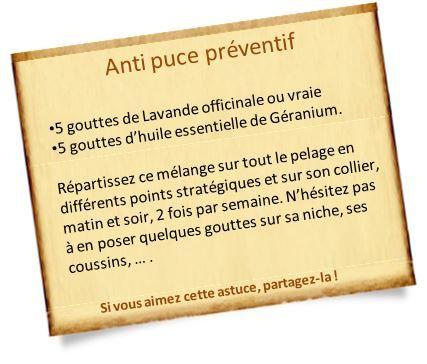 anti puce naturel préventif