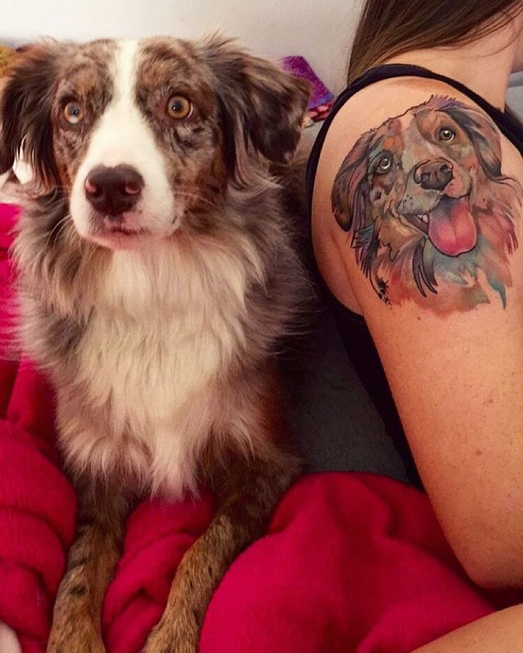 My mom @carrie_cook says she got a tattoo of me on her arm... I don't really know what that means. There's only one of me! #ruethepooch #dogsofinstagram  #dogtattoo #dogportrait #pettattoo #petportrait #miniaussie #watercolortattoo #aussiesofinstagram #dog_features #dogstagram #tattoo #lovemydog #girlswithtattoos #keltait
