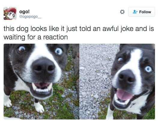 Literally Just 23 Great Tweets About Dogs Acting Like Humans