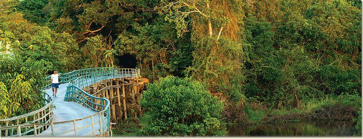 Amazon Rainforest Hotel | Ariau Amazon Towers Hotel | Rainforest near Manaus, Brazil - Leo Principe - Photographer