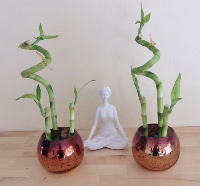 92 best images about plantas para el interior on pinterest - Plantas de interior altas ...
