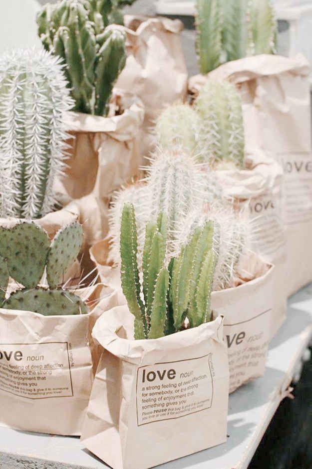Esconde las macetas de tus cactus o suculentas en bolsas de papel con diseños retro.