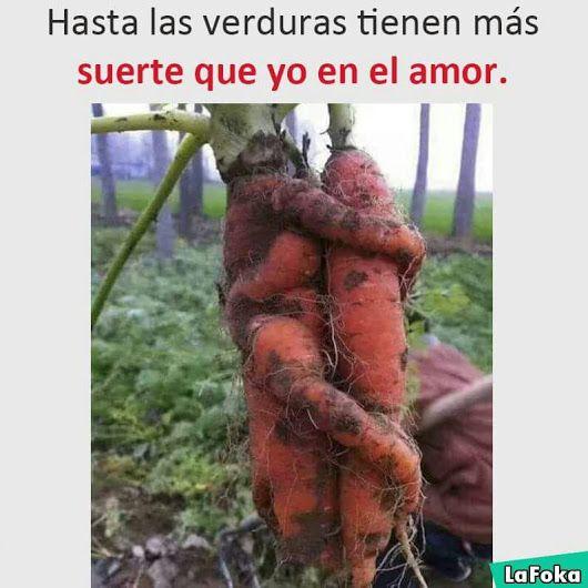 hasta las verduras-Imagen Graciosa de Hoy nº 88403