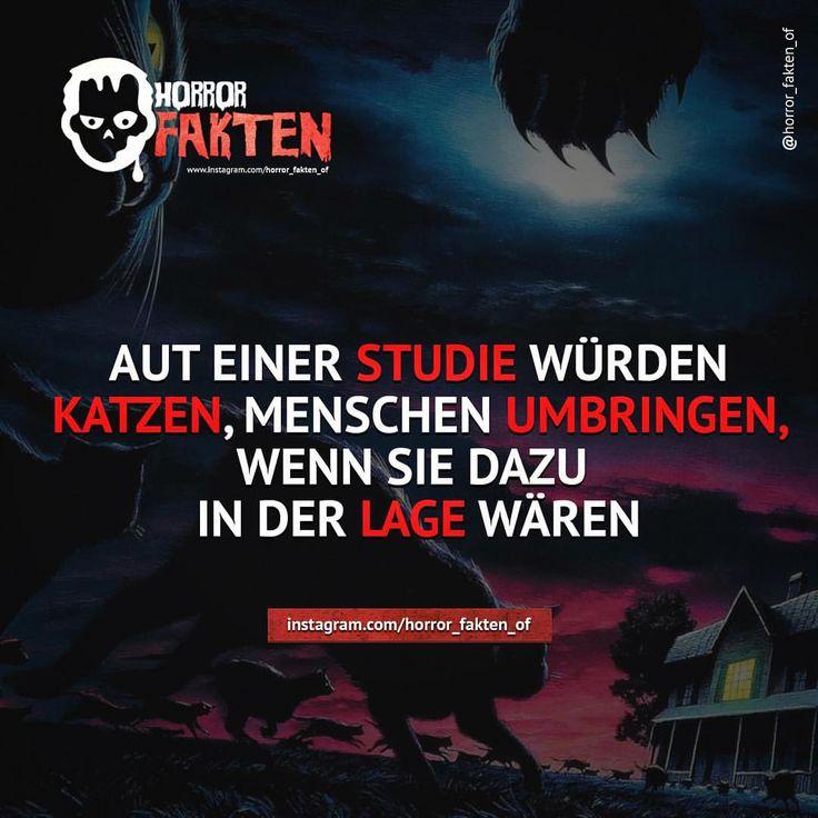 Böse Katze   #horror #horrorfakten #fakten