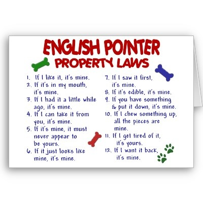 ENGLISH POINTER Property Laws 2 Greeting Cards by poochloverstuff