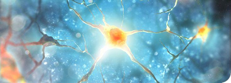 Die Wissenschaft der Epigenetik - Kontrolle oberhalb von Genetik - Horizonworld - bewusst leben und denken