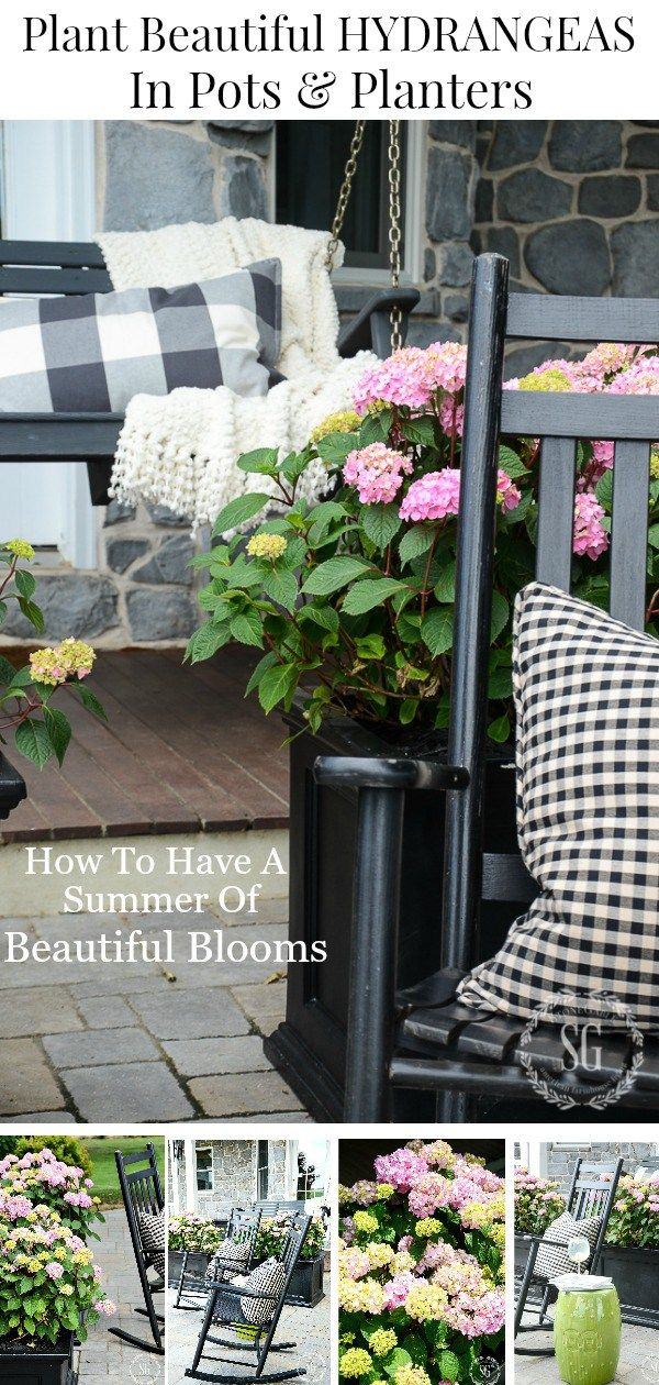 HOW TO PLANT HYDRANGEAS IN POTS AND