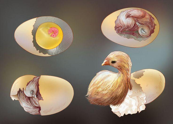 reproduccion en aves