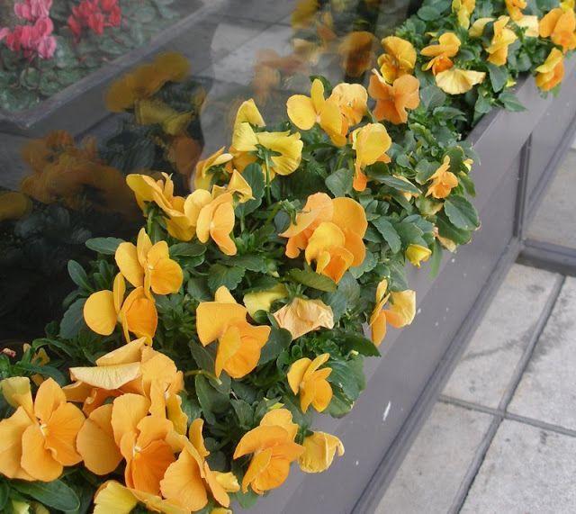 Φτιάξε δικούς σου πανσέδες για τον μπαλκόνι και τον κήπο | Κηπολόγιο