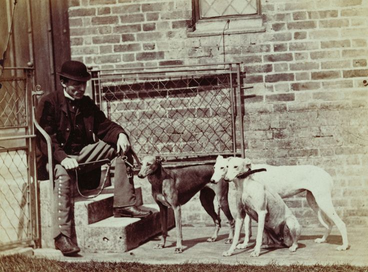Italian Greyhound Queen Victoria 359 best images about ...
