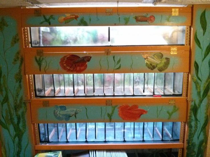 122 besten betta fish picture bilder auf pinterest kampffisch aquarien und aquarienfische. Black Bedroom Furniture Sets. Home Design Ideas