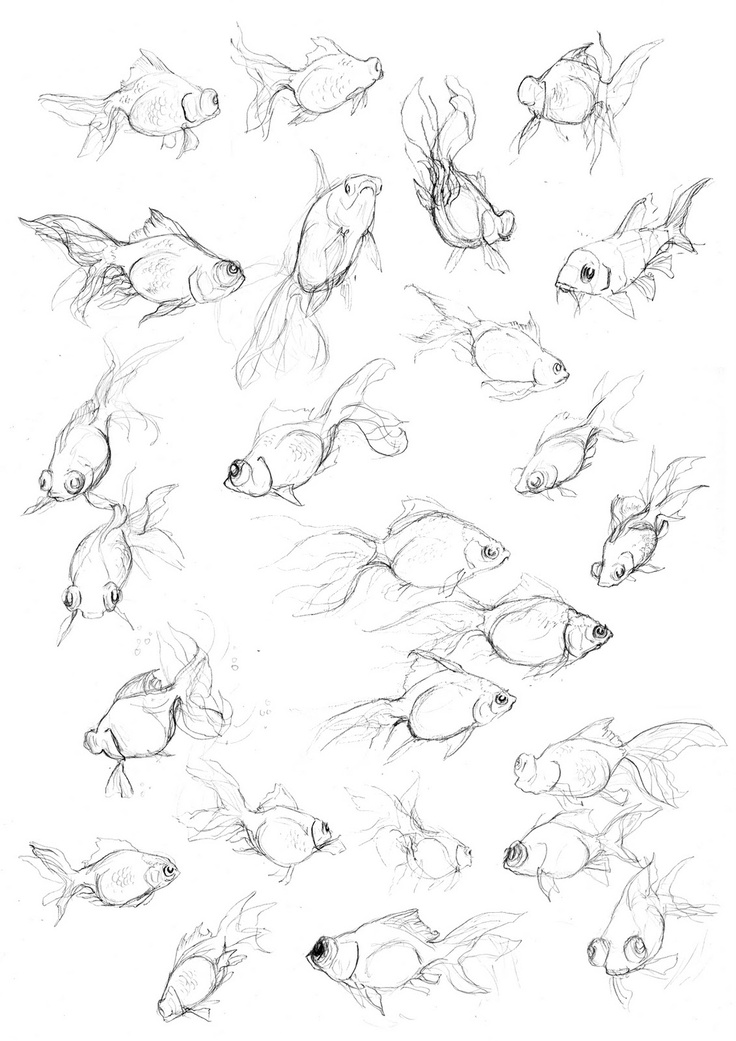 Fish Sketches @ Donna...do you see your fishies?