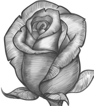 how to draw a rose bud, rose bud