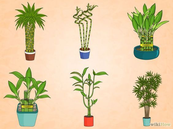 Care for an Indoor Bamboo Plant Step 1 Version 3.jpg