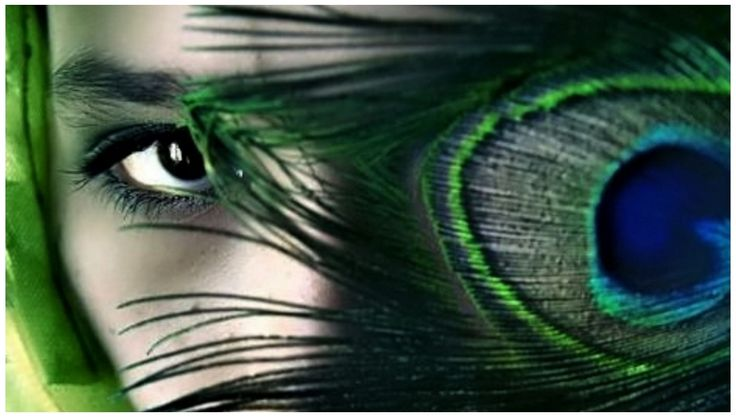 Legend Peacock Animal Eyes Abstract Wallpapers