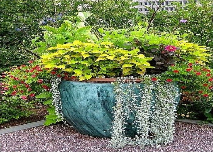 Outdoor Potted Plant Entryway Ideas Potted Plants Outdoor Fairy Garden Containers Plants