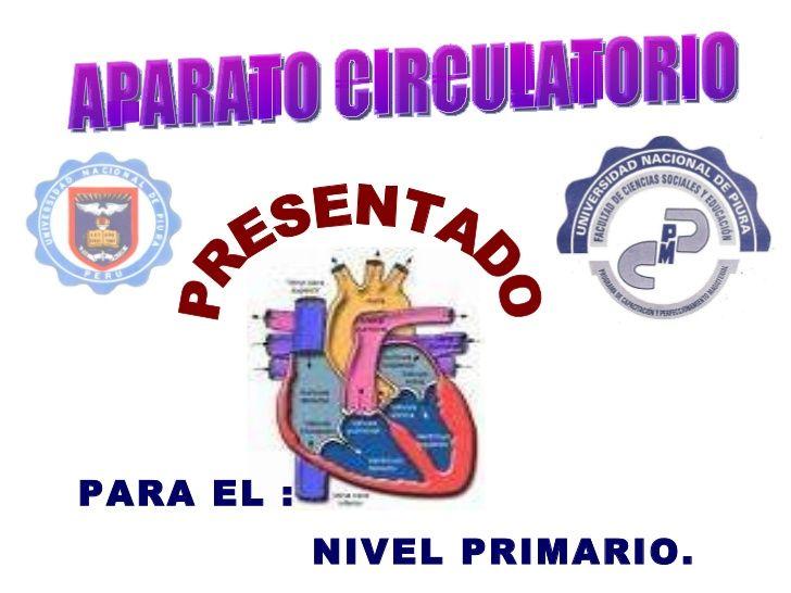 Ms de 25 ideas increbles sobre Aparato circulatorio en Pinterest