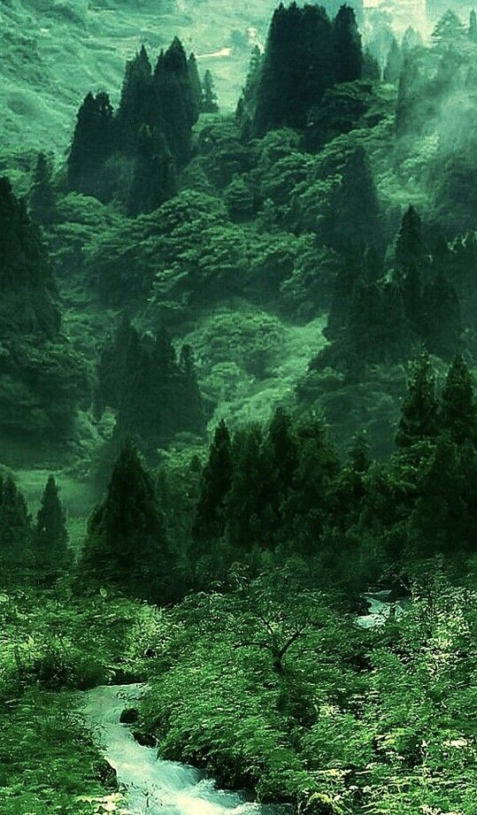 Green - Indian forest