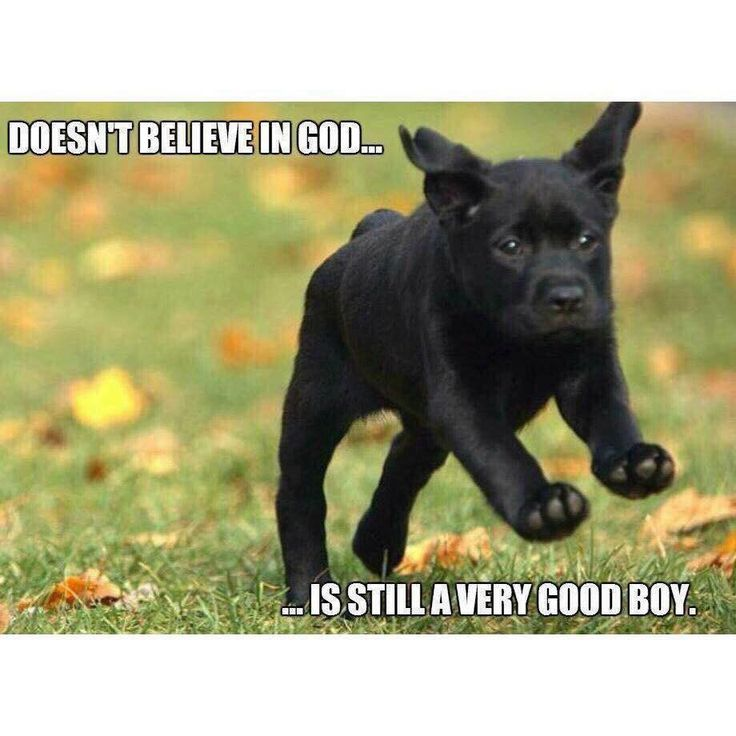 Arguably the cutest atheist meme ever made..