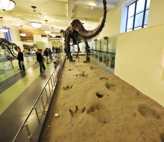 Glen Rose Footprints American Museum Of Natural History