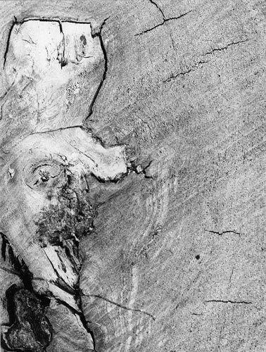 Italian neorealism essay