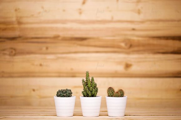 Styled Cacti - Wood Background by JustLikeMyDesktop on Creative Market