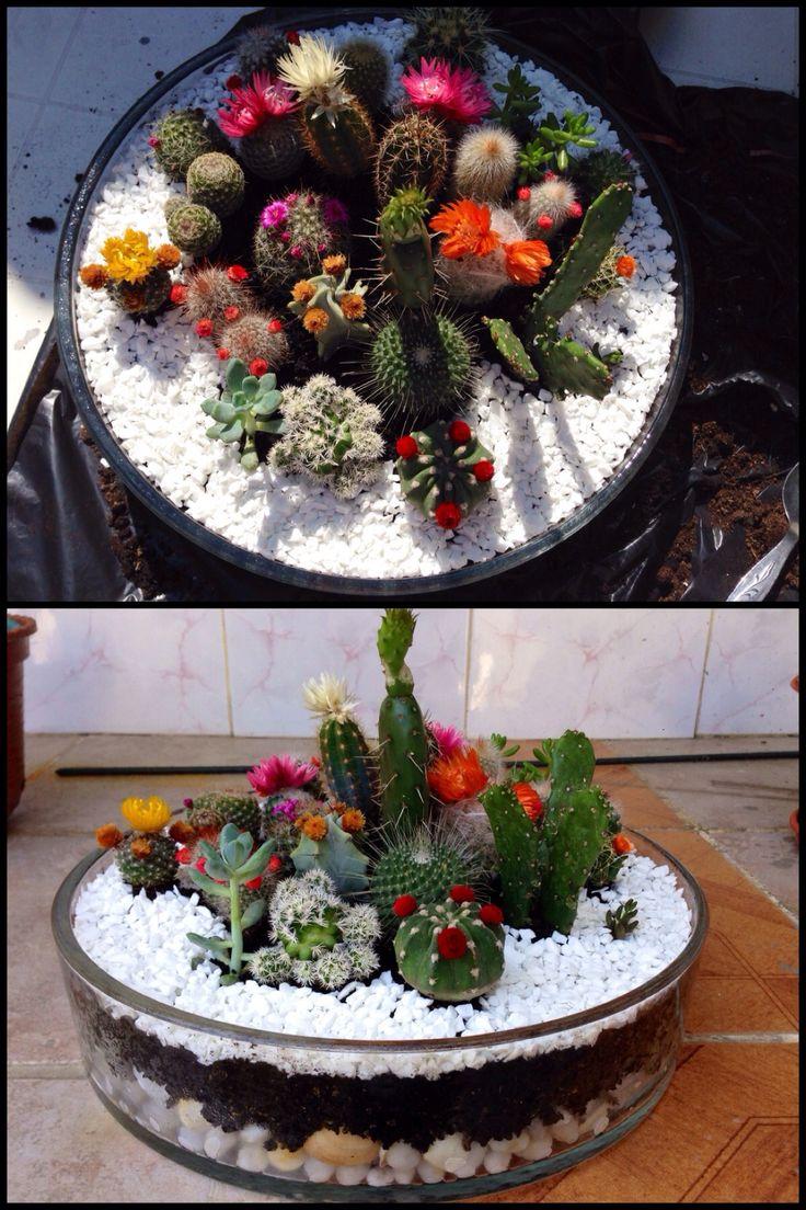 My mini cactus' garden. 25 years, 25 cactus <3