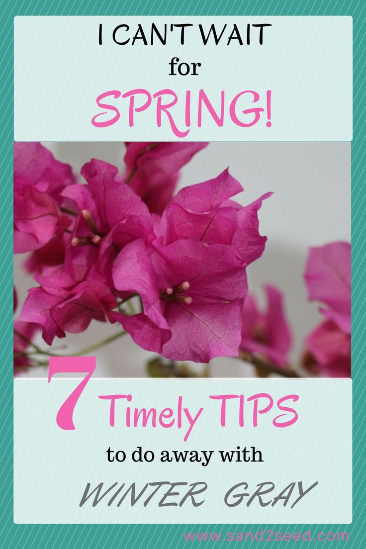 When the February Grays and the March Lions get you down with rain and drear, here are some timely tips to help do away with Winter Gray, opening up to the possibilities of Spring. With a  fun little PDF that helps you become proactive, not reactive.