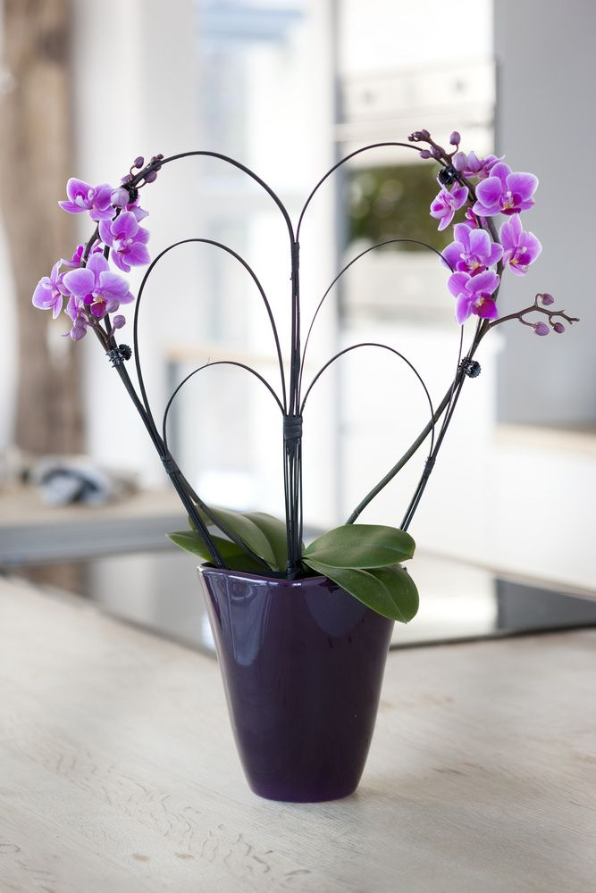 cute heart shaped Orchids arrangement