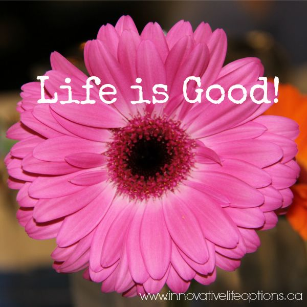 #Life is Good in the Company of #Friends!  Life is all about #relationiships...for all of us!  Love this vibrant, pink flower!  It shouts #happy!