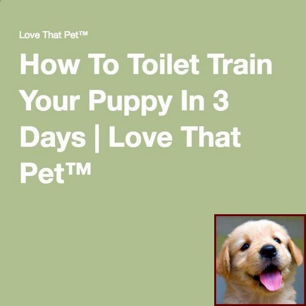 House Training A Puppy At Night And Clicker Training Dogs Tricks