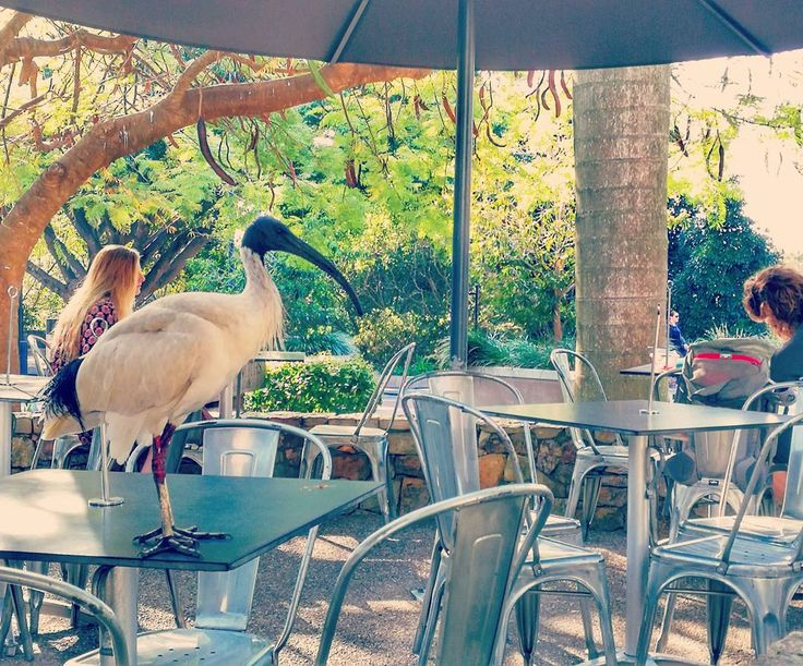 Breakfast with a pal this morning at UQ  #UQ #SamAtUQ