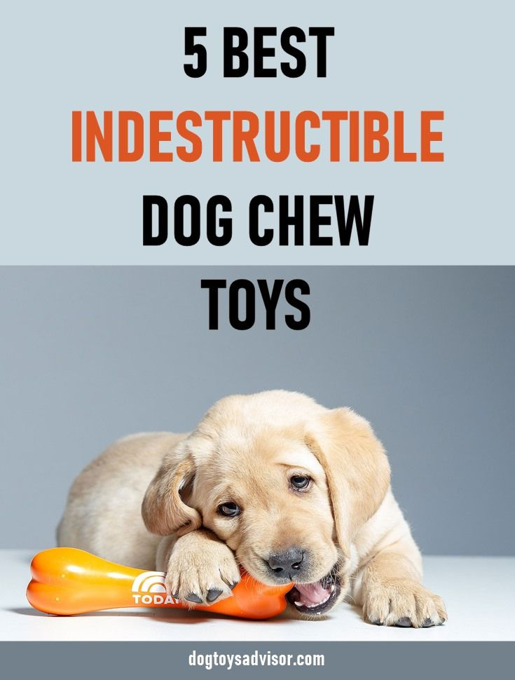 If Your Dog Is Like Ours Heavy Duty Chewers Chew Toys Don T