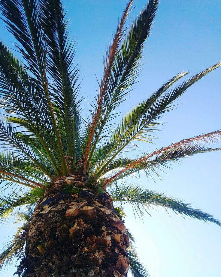 Summertime  Tree