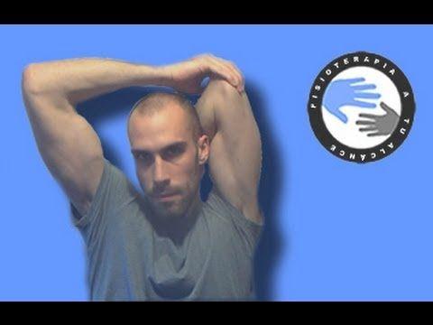 Triceps braquial, estiramientos y anatomía para el hombro / Fisioterapia a tu alcance
