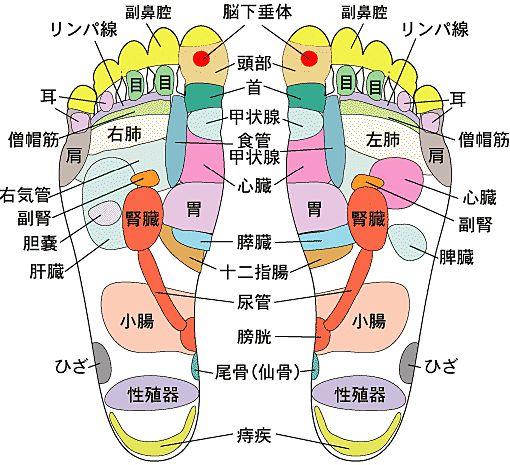 足裏にはこんなにツボがある。 このツボを刺激すると 各部位...
