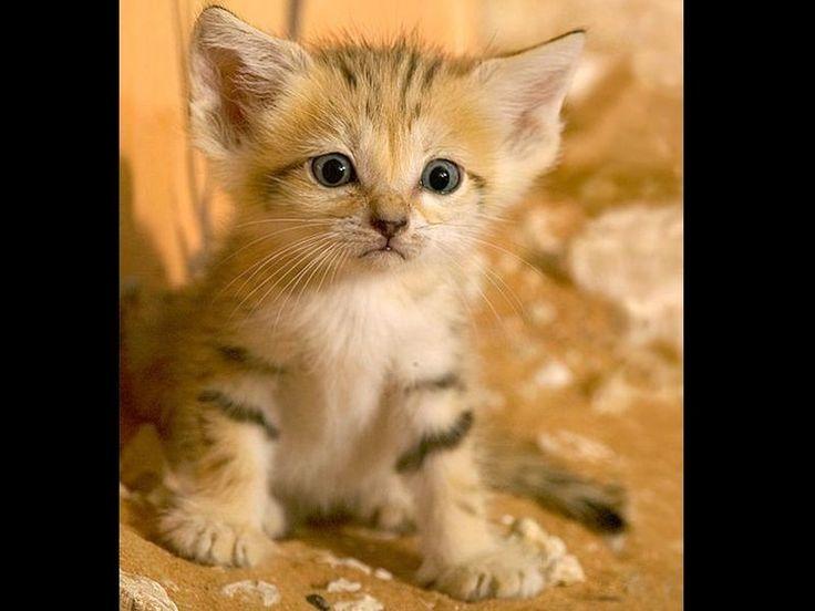 Kleine süße Sandkatze ♥